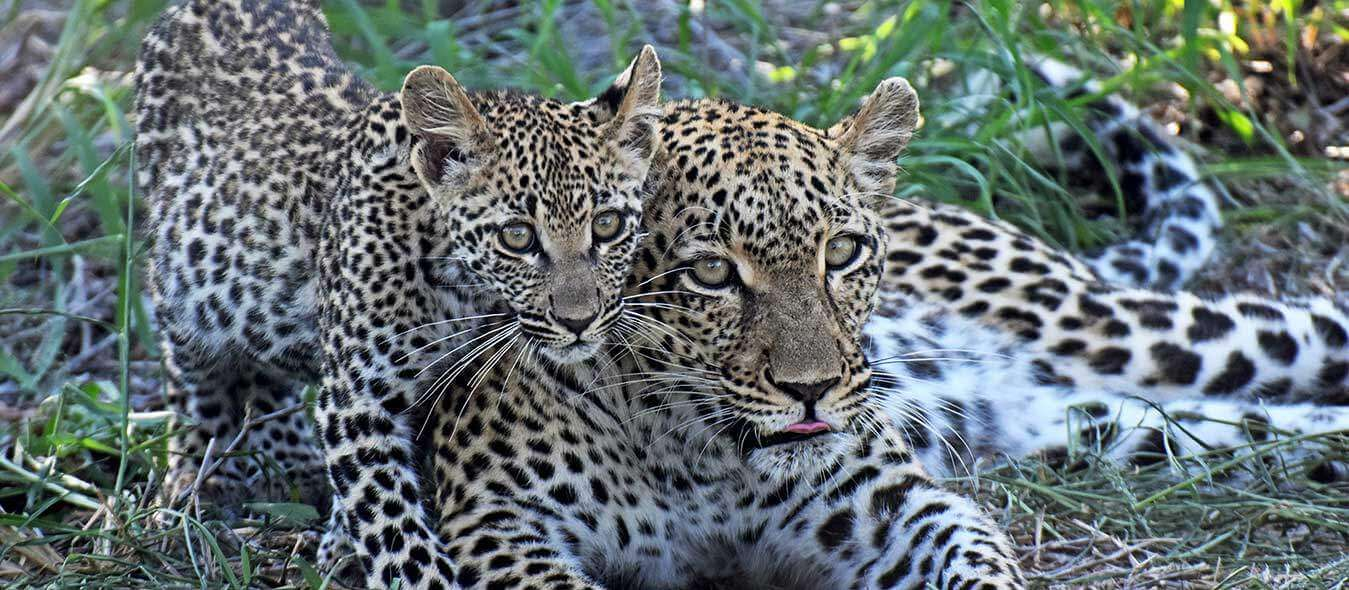 game drive vacation packages