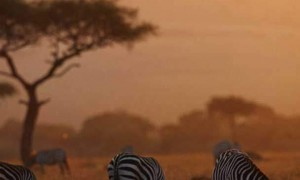 namibia vacation packages