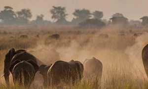Botswana safari wildlife