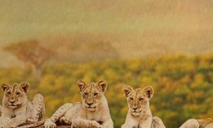Zimbabwe vacation packages